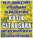 Od 19. januára uverejňuje Maj Gemer na pokračovanie Kútik citrusára, ktorý pripravuje Rudolf Pellionis